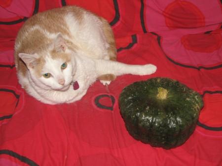 Cat&QB
